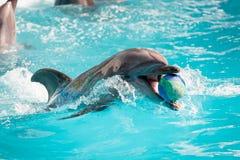 Delfin i pölleken Arkivfoto