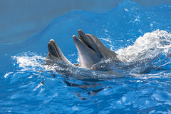 Delfin i vattnet parkerar Arkivbild