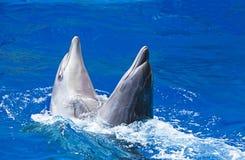 Delfin i vattnet parkerar Arkivfoto
