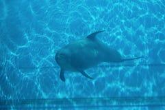 Delfin III Arkivfoton