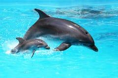 Delfin med en behandla som ett barn som svävar i vattnet Arkivfoto