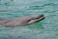 Delfin med head ut vatten Arkivbild