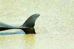delfin nie żyje obrazy stock