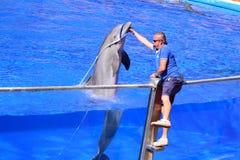 Delfin och man Arkivfoto