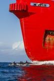 Delfin och rött lastfartyg Arkivfoton