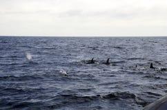 Delfin på havet Arkivfoto
