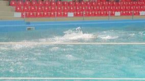 Delfin pary dopłynięcie zbiory wideo