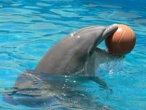 delfin piłkę Fotografia Royalty Free