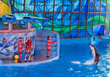Delfin przy Seaworld zdjęcia royalty free