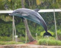 Delfin - Seaworld Australien Arkivfoton