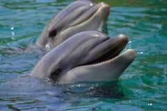 Delfin simmar i havet, ståenden som ler delfin Arkivfoto