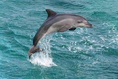 delfin skacze fotografia stock