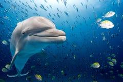 Delfin som är undervattens- på blå havbakgrund Royaltyfri Fotografi