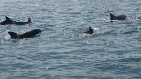 Delfin som håller ögonen på kryssning i Amakusa, Kumamoto royaltyfri bild