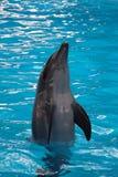 Delfin som hoppar upp Royaltyfria Foton