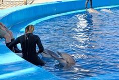Delfin som påverkar varandra med deras instruktörer Arkivbild