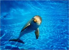 Delfin som ser kameran royaltyfri bild