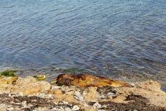 delfin tömt land Royaltyfri Fotografi