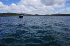 Delfin w Ireland zdjęcia stock