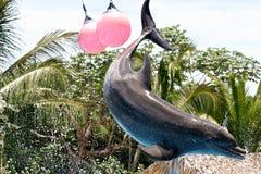 Delfin w locie Zdjęcia Royalty Free