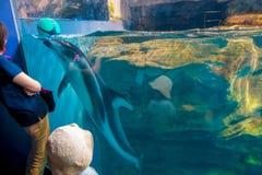 Delfin w Osaka akwarium Kaiyukan, jeden wielcy jawni akwaria w świacie w Osaka, Japonia obrazy royalty free
