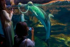 Delfin w Osaka akwarium Kaiyukan, jeden wielcy jawni akwaria w świacie w Osaka, Japonia zdjęcia royalty free