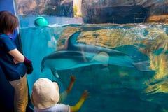 Delfin w Osaka akwarium Kaiyukan, jeden wielcy jawni akwaria w świacie w Osaka, Japonia obraz stock