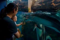 Delfin w Osaka akwarium Kaiyukan, jeden wielcy jawni akwaria w świacie w Osaka, Japonia zdjęcie royalty free