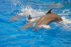 Delfin w pływackim basenie Obrazy Royalty Free