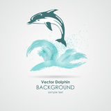 Delfin w wodnym pluśnięciu Obraz Stock