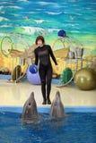 Delfinariet Arkivbilder
