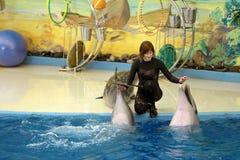 Delfinariet Arkivfoto