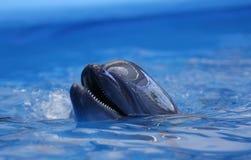 delfinariumöppning Arkivfoto