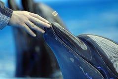delfinariumöppning Royaltyfri Fotografi