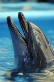delfinariumöppning Arkivbild