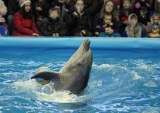 delfinariumöppning Arkivbilder