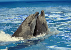 delfinariumöppning Royaltyfri Foto