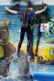 delfinariumöppning arkivfoton