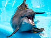 delfinbög Arkivfoton