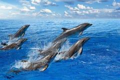 Delfinbanhoppning Royaltyfri Bild