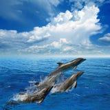 Delfinbanhoppning Fotografering för Bildbyråer