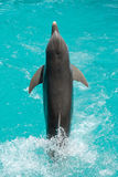 delfinbanhoppning Arkivfoton