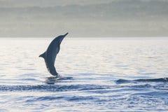 Delfinbanhoppning i delfinstranden Lovina, Bali Royaltyfri Bild