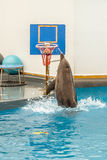 Delfinbanhoppning till och med ett beslag Arkivbild