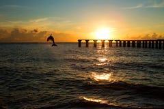 Delfinbanhoppning ut ur havet i florida Arkivbild