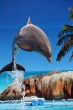 Delfinbanhoppning ut ur vattnet Royaltyfri Foto