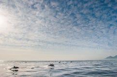 Delfinbanhoppning ut ur vattnet Arkivfoto
