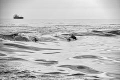 Delfinbanhoppning utanför havet Fotografering för Bildbyråer
