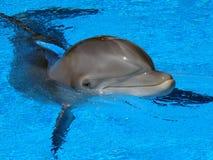 delfinbarn Royaltyfri Bild
