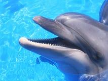 Delfinbild - härliga delfinmaterielfoto Royaltyfria Foton